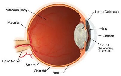 Cataract and trabeculectomy surgery